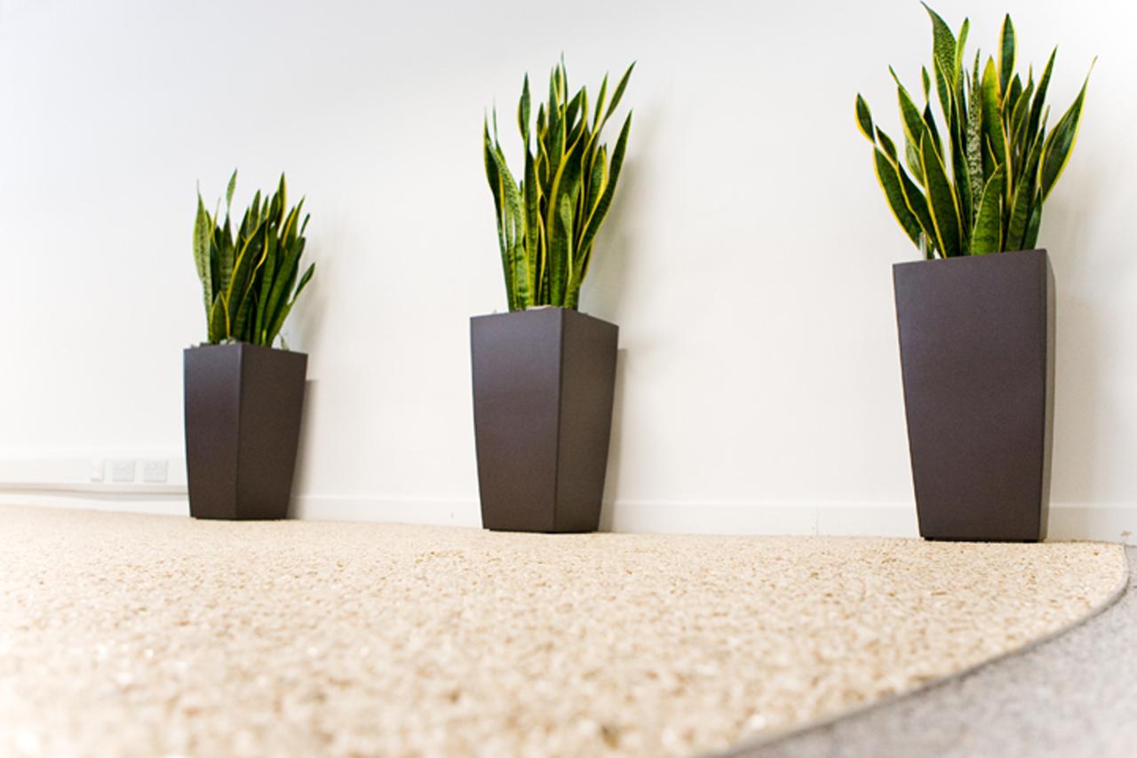 Office plants bolton manchester cheshire lancashire for Design indoor plant pots uk